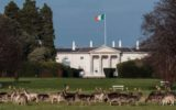 View of tricolour flying over Áras an Uachtaráin with deer in forground