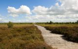 Bog surrounding the Corlea Trackway visitor centre