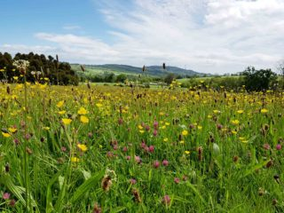 Picturesque view of the wildflower meadow at Kilmaccurragh with countryside in background