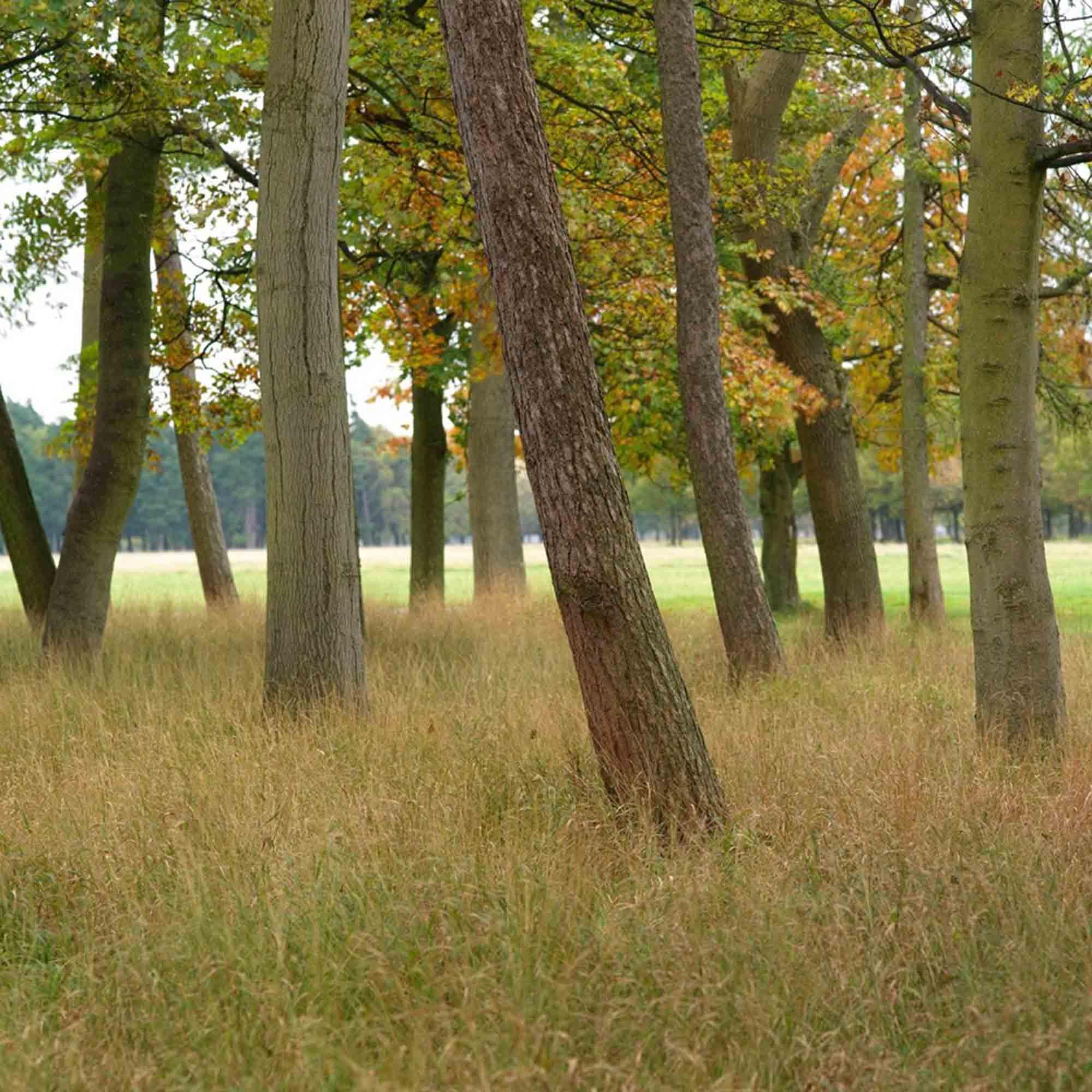 Phoenix Park parkland