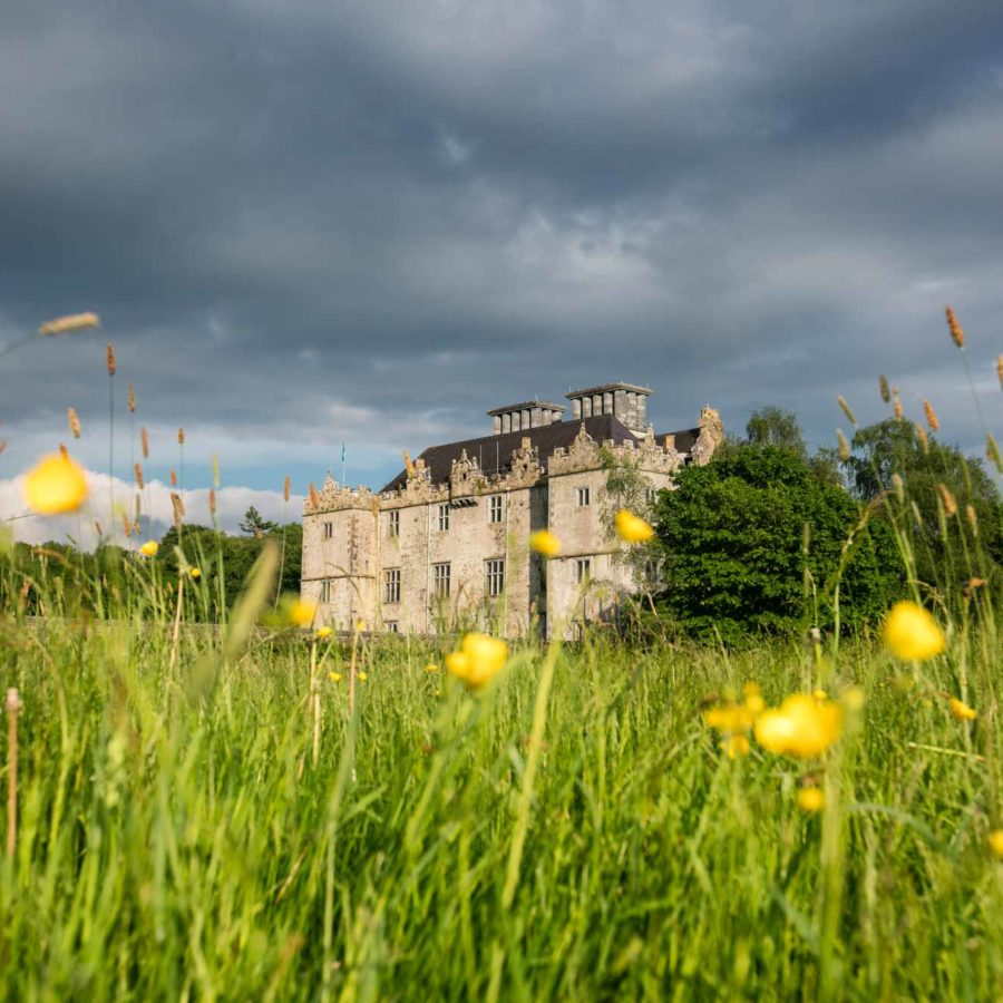 Portumna Castle framed by wildflowers.
