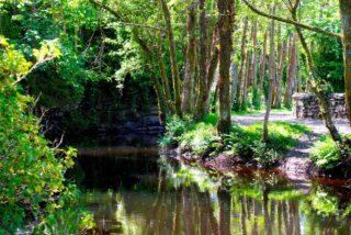 River Drimeen