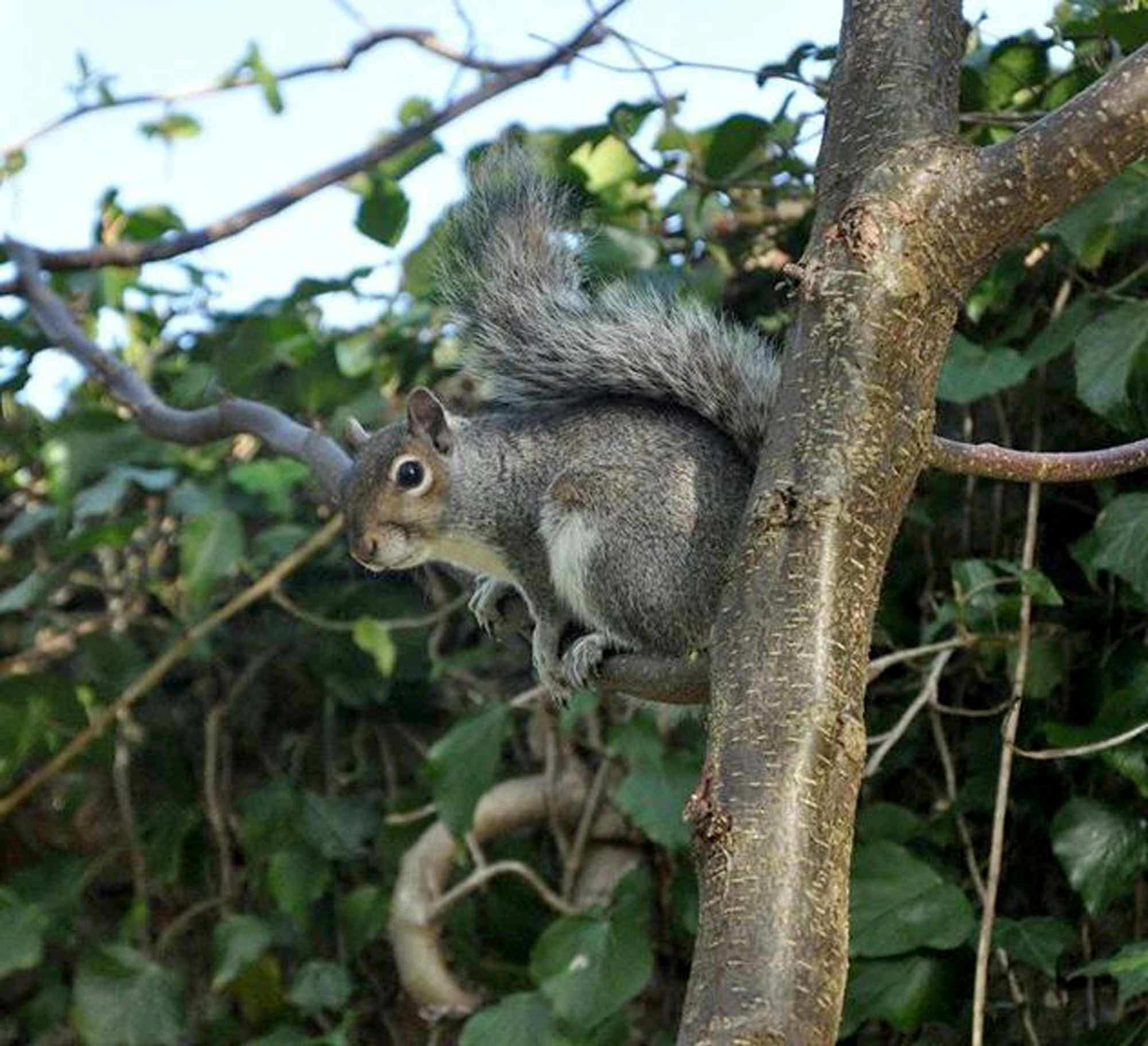 Squirrel in a tree.