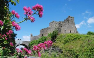 View looking up to Carlingford Castle from roadside
